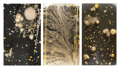 Crystalusion™ – Liquid Glass Protection Bacteria-on-devices-university-surrey